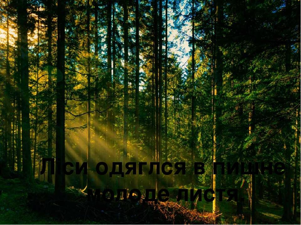 Ліси одяглся в пишне молоде листя.