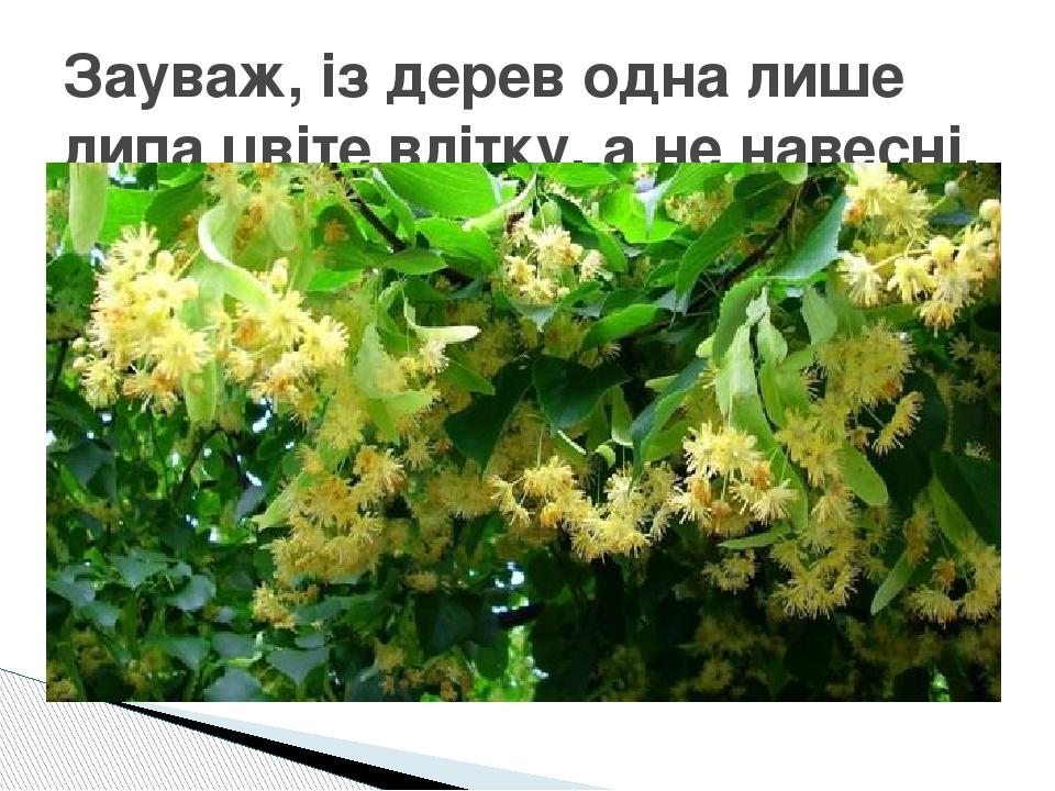 Зауваж, із дерев одна лише липа цвіте влітку, а не навесні.