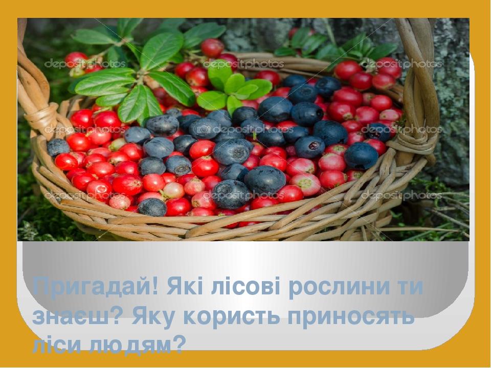 Пригадай! Які лісові рослини ти знаєш? Яку користь приносять ліси людям?