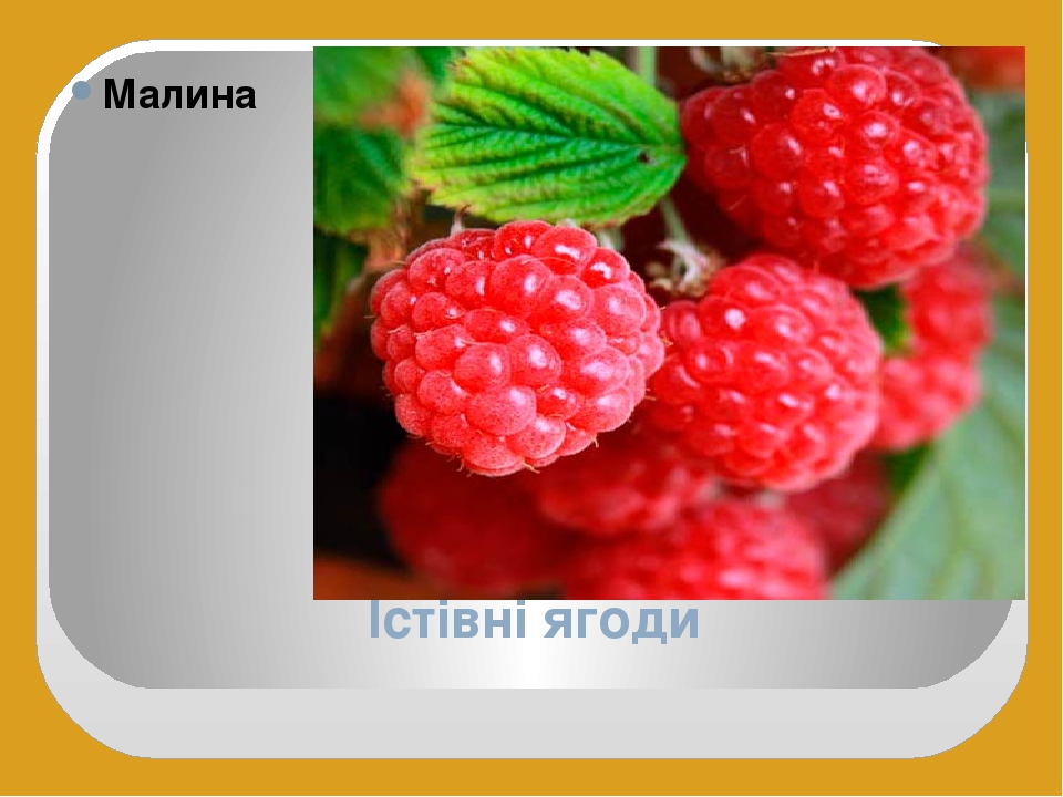 Їстівні ягоди Малина