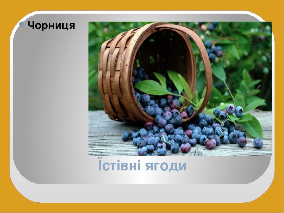 Їстівні ягоди Чорниця