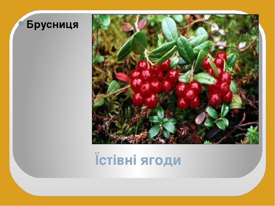 Їстівні ягоди Брусниця