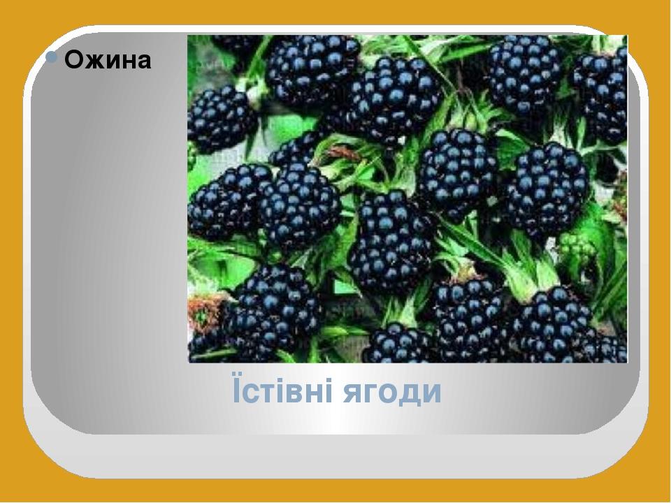 Їстівні ягоди Ожина