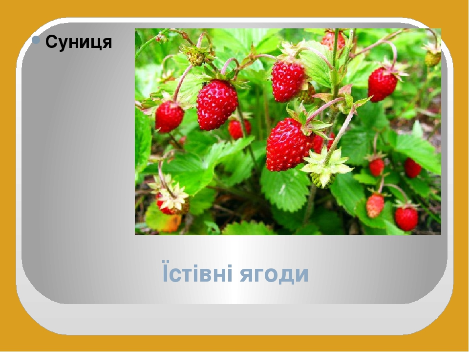 Їстівні ягоди Суниця
