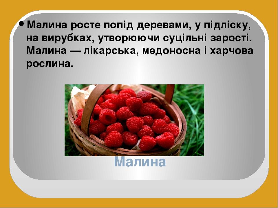 Малина Малина росте попід деревами, у підліску, на вирубках, утворюючи суцільні зарості. Малина — лікарська, медоносна і харчова рослина.