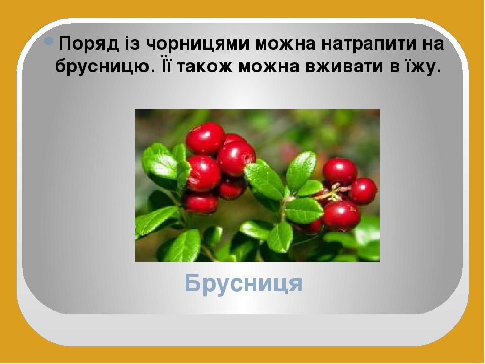 Брусниця Поряд із чорницями можна натрапити на брусницю. Її також можна вживати в їжу.