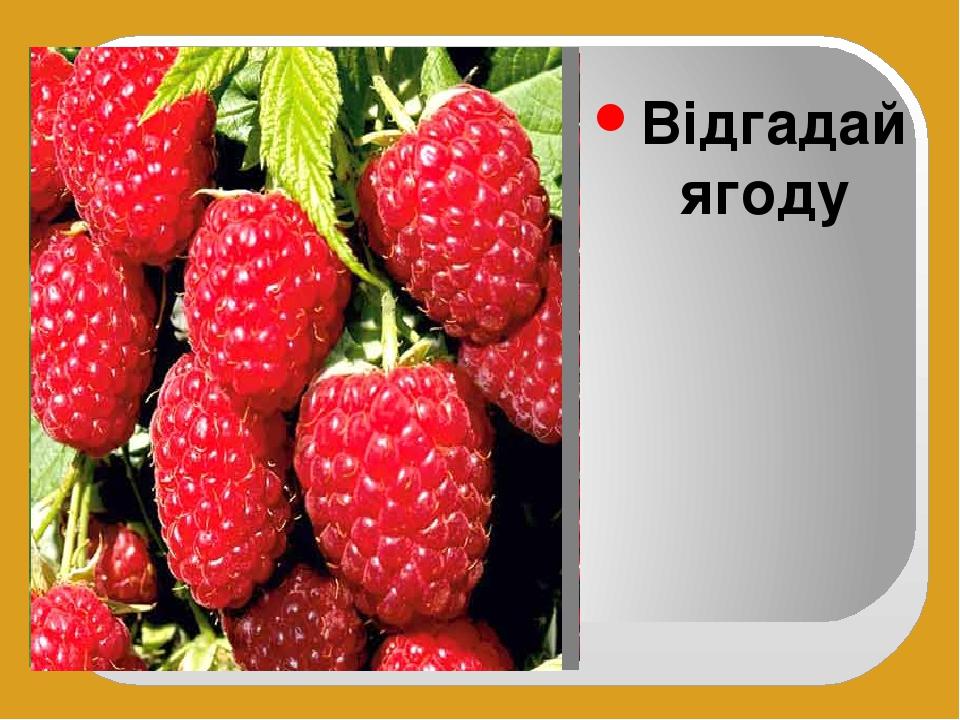 Відгадай ягоду