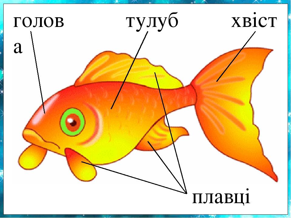 голова плавці тулуб хвіст