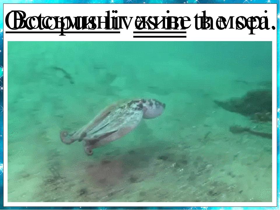 Octopus lives in the sea. Восьминіг живе в морі.