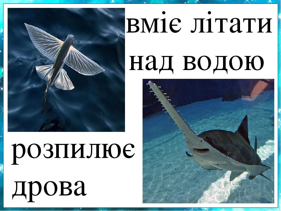вміє літати над водою розпилює дрова