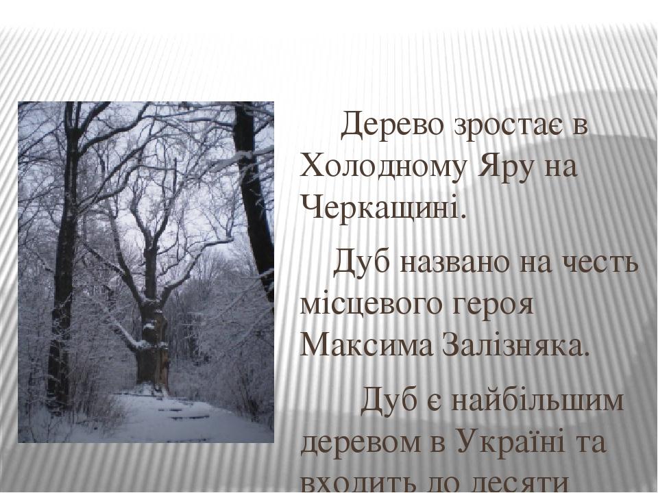 Дерево зростає в Холодному Яру на Черкащині. Дуб названо на честь місцевого героя Максима Залізняка. Дуб є найбільшим деревом в Україні та входить ...