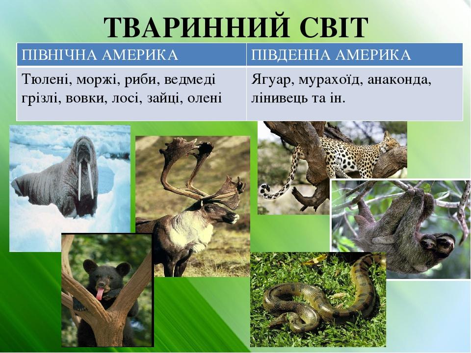 ТВАРИННИЙ СВІТ ПІВНІЧНААМЕРИКА ПІВДЕННА АМЕРИКА Тюлені,моржі, риби, ведмедігрізлі, вовки, лосі, зайці, олені Ягуар,мурахоїд, анаконда, лінивець та ін.