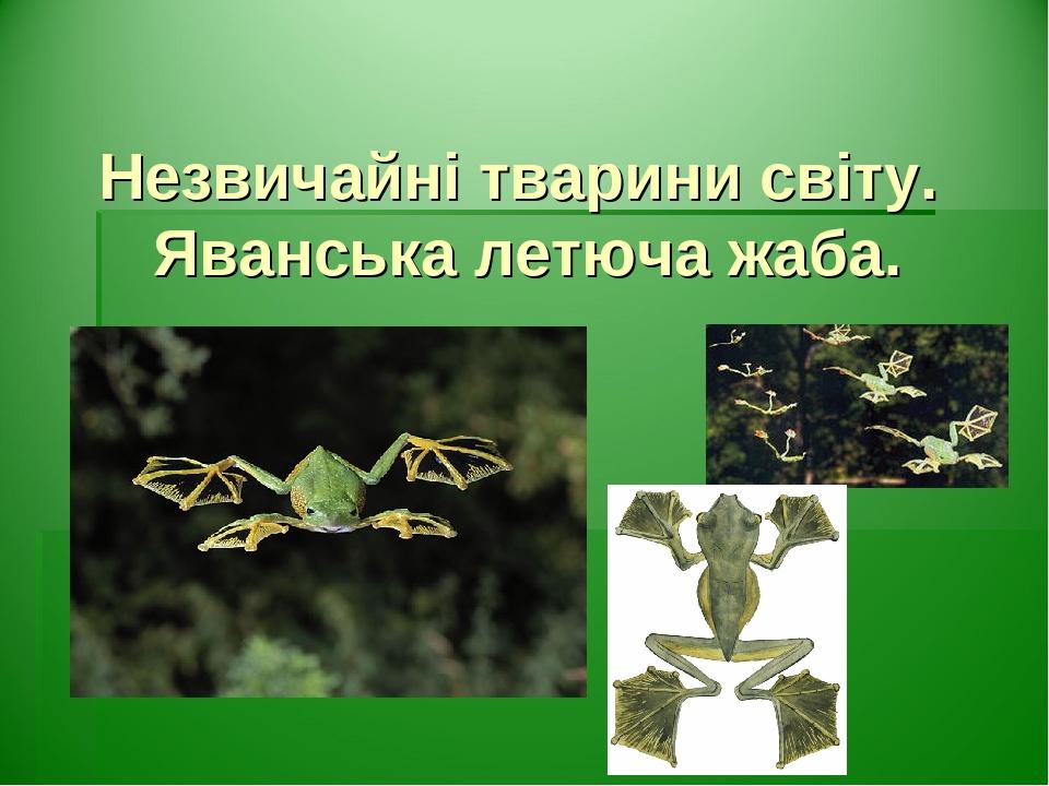 Незвичайні тварини світу. Яванська летюча жаба.