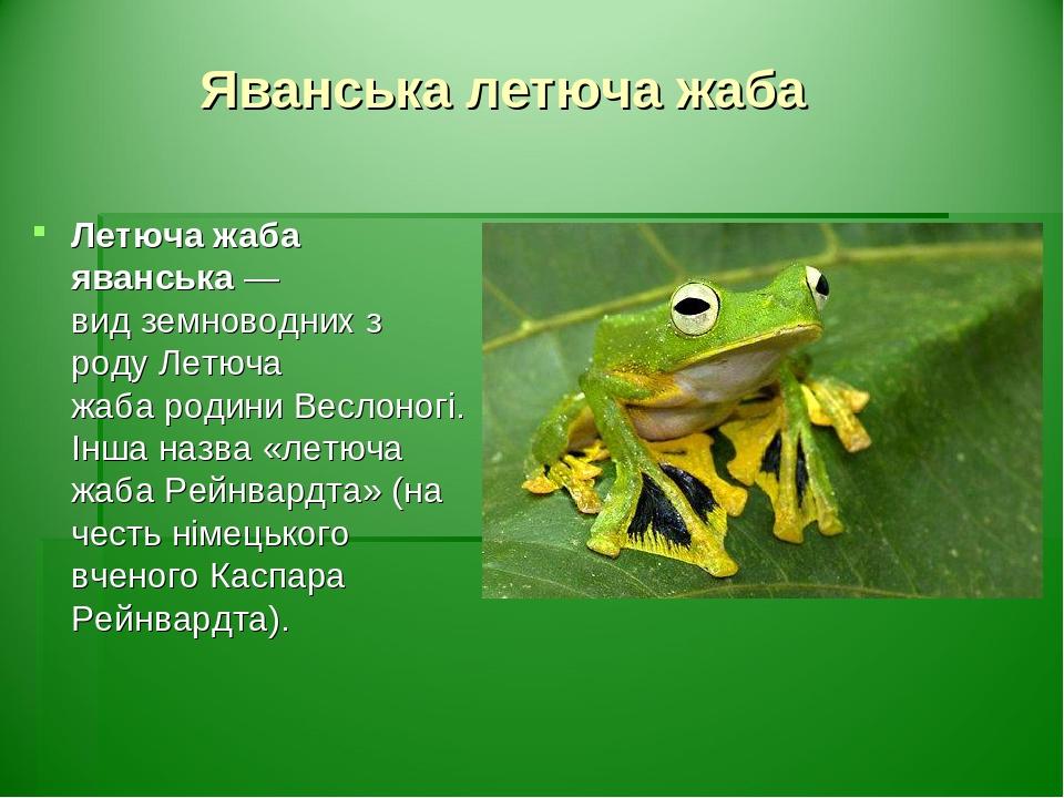 Яванська летюча жаба Летюча жаба яванська— видземноводнихз родуЛетюча жабародиниВеслоногі. Інша назва «летюча жаба Рейнвардта» (на честь німе...