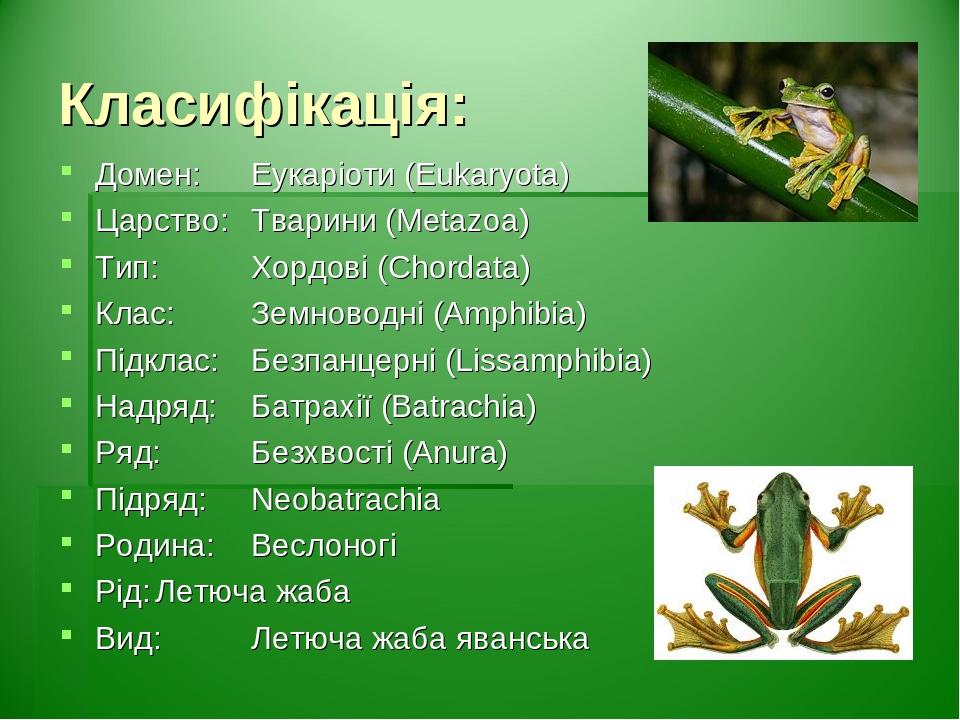 Класифікація: Домен: Еукаріоти (Eukaryota) Царство: Тварини (Metazoa) Тип: Хордові (Chordata) Клас: Земноводні (Amphibia) Підклас: Безпанцерні (Lis...