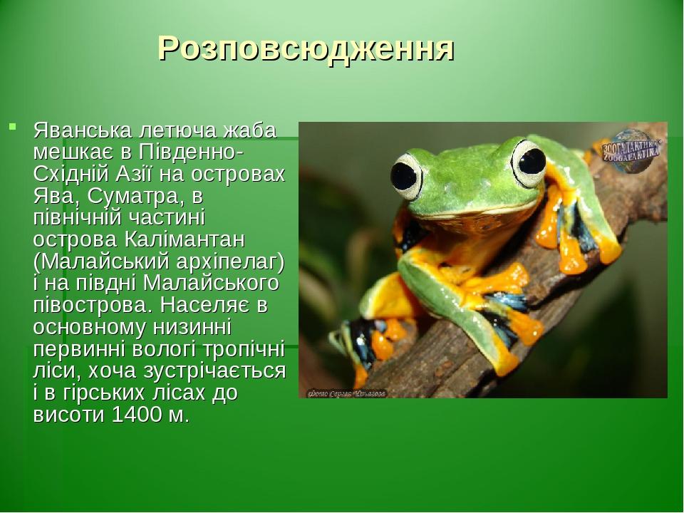 Розповсюдження Яванська летюча жаба мешкає в Південно-Східній Азії на островах Ява, Суматра, в північній частині острова Калімантан (Малайський арх...
