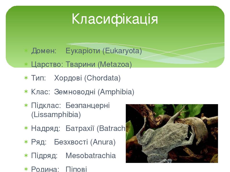 Домен: Еукаріоти (Eukaryota) Царство: Тварини (Metazoa) Тип: Хордові (Chordata) Клас: Земноводні (Amphibia) Підклас: Безпанцерні (Lissamphibia) Над...