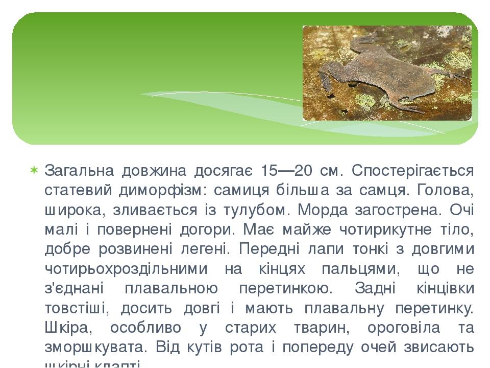 Загальна довжина досягає 15—20 см. Спостерігається статевий диморфізм: самиця більша за самця. Голова, широка, зливається із тулубом. Морда загостр...