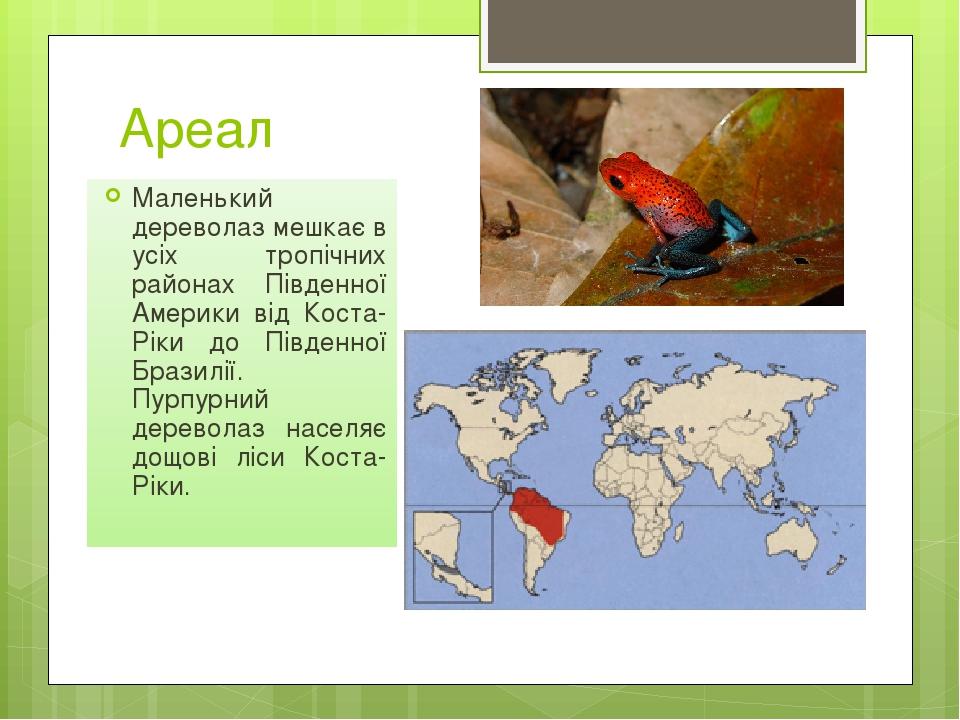 Ареал Маленький дереволаз мешкає в усіх тропічних районах Південної Америки від Коста-Ріки до Південної Бразилії. Пурпурний дереволаз населяє дощов...