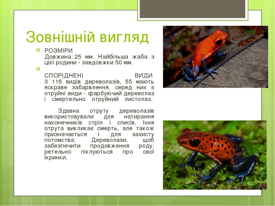 Зовнішній вигляд РОЗМІРИ Довжина:25 мм. Найбільша жаба з цієї родини - завдовжки 50 мм. СПОРІДНЕНІ ВИДИ 3 116 видів дереволазів, 55 мають яскра...