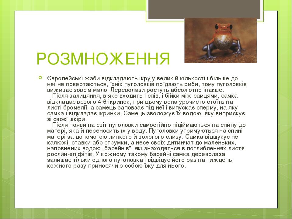 РОЗМНОЖЕННЯ Європейські жаби відкладають ікру у великій кількості і більше до неї не повертаються, їхніх пуголовків поїдають риби, тому пуголовків ...