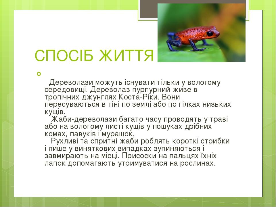 СПОСІБ ЖИТТЯ Дереволази можуть існувати тільки у вологому середовищі. Дереволаз пурпурний живе в тропічних джунглях Коста-Ріки. Вони пересуваються...