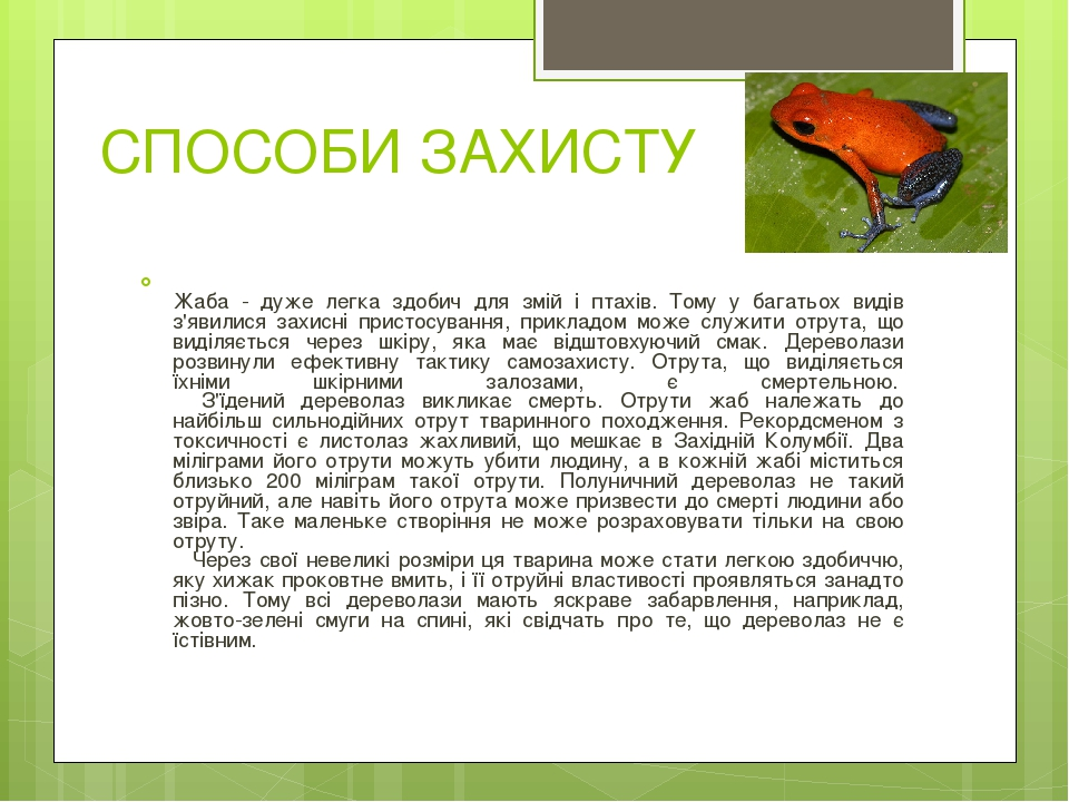 СПОСОБИ ЗАХИСТУ Жаба - дуже легка здобич для змій і птахів. Тому у багатьох видів з'явилися захисні пристосування, прикладом може служити отрута, щ...