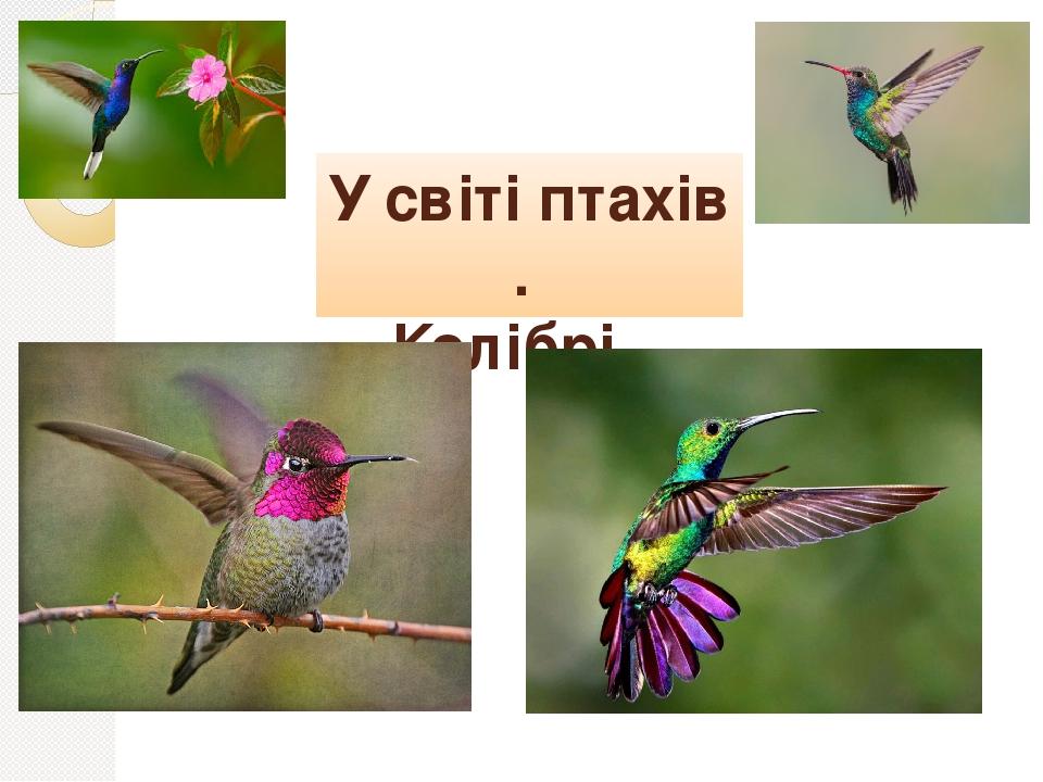 У світі птахів . Колібрі .