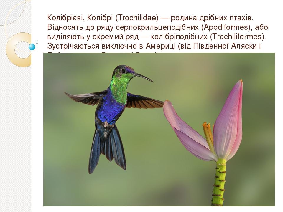 Колібрієві, Колібрі (Trochilidae) — родина дрібних птахів. Відносять до ряду серпокрильцеподібних (Apodiformes), або виділяють у окремий ряд — колі...
