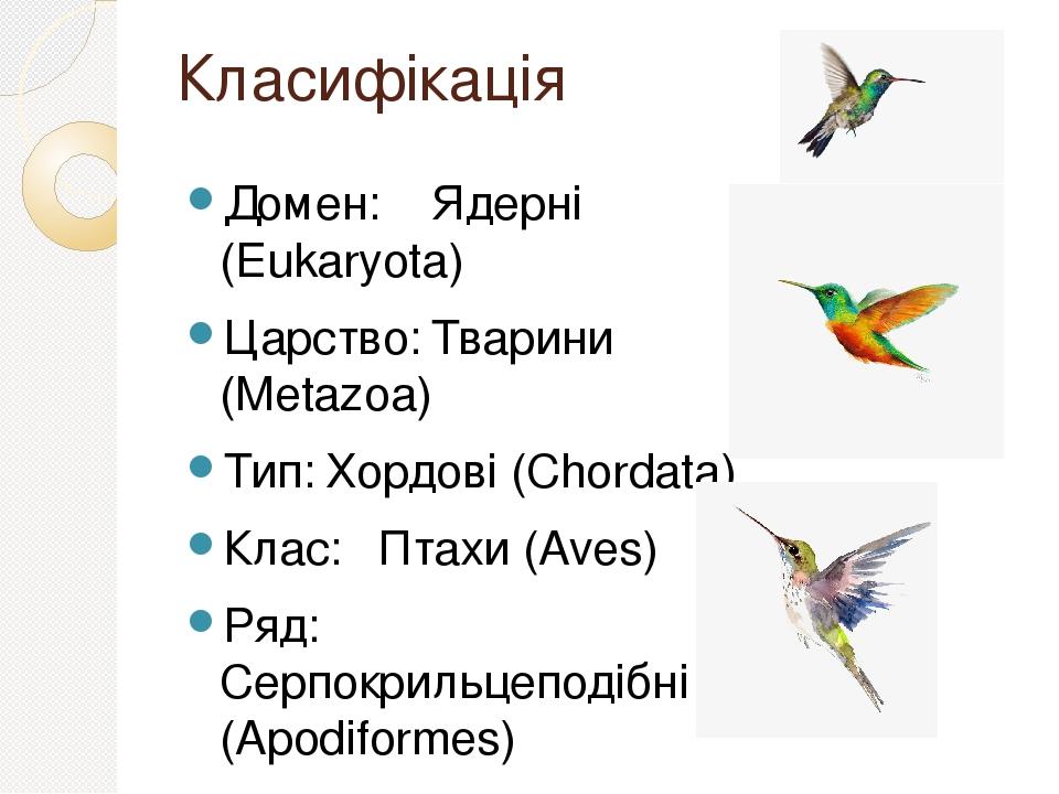 Класифікація Домен: Ядерні (Eukaryota) Царство: Тварини (Metazoa) Тип: Хордові (Chordata) Клас: Птахи (Aves) Ряд: Серпокрильцеподібні (Apodiformes)...