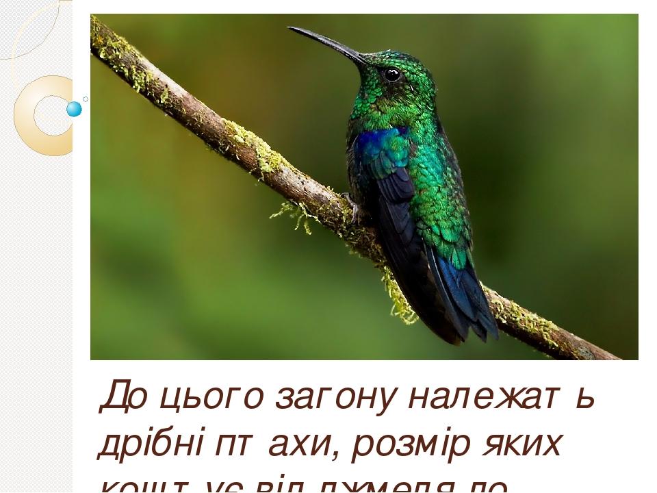 До цього загону належать дрібні птахи, розмір яких коштує від джмеля до ластівки. Сюди відносяться найдрібніші птахи Землі (розміром 5,7 див і ваго...