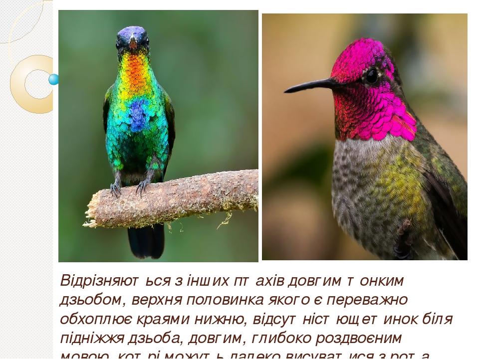 Відрізняються з інших птахів довгим тонким дзьобом, верхня половинка якого є переважно обхоплює краями нижню, відсутністющетинок біля підніжжя дзьо...