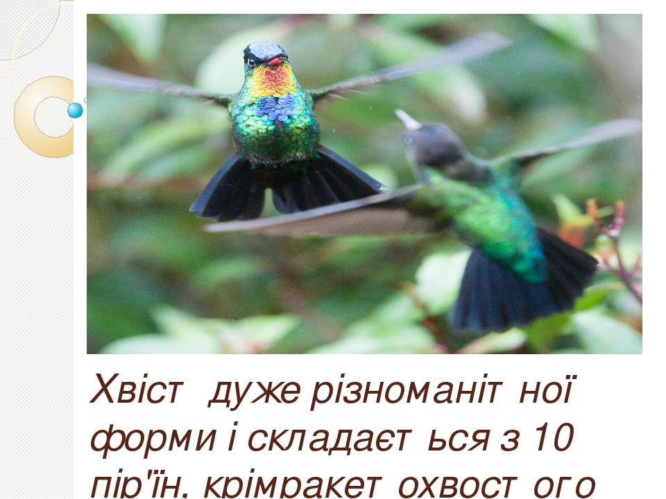 Хвіст дуже різноманітної форми і складається з 10 пір'їн, крімракетохвостого колібрі, y якої лише чотири рульових пера. Політ їх надзвичайно швидки...