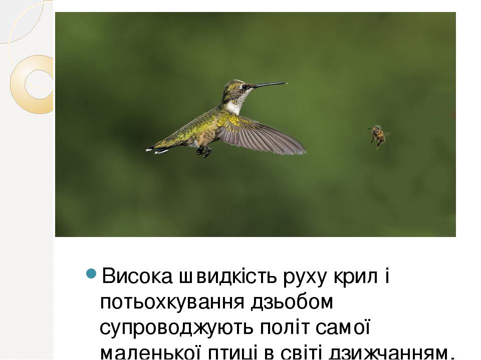 Висока швидкість руху крил і потьохкування дзьобом супроводжують політ самої маленької птиці в світі дзижчанням, що нагадує звучання бджоли.