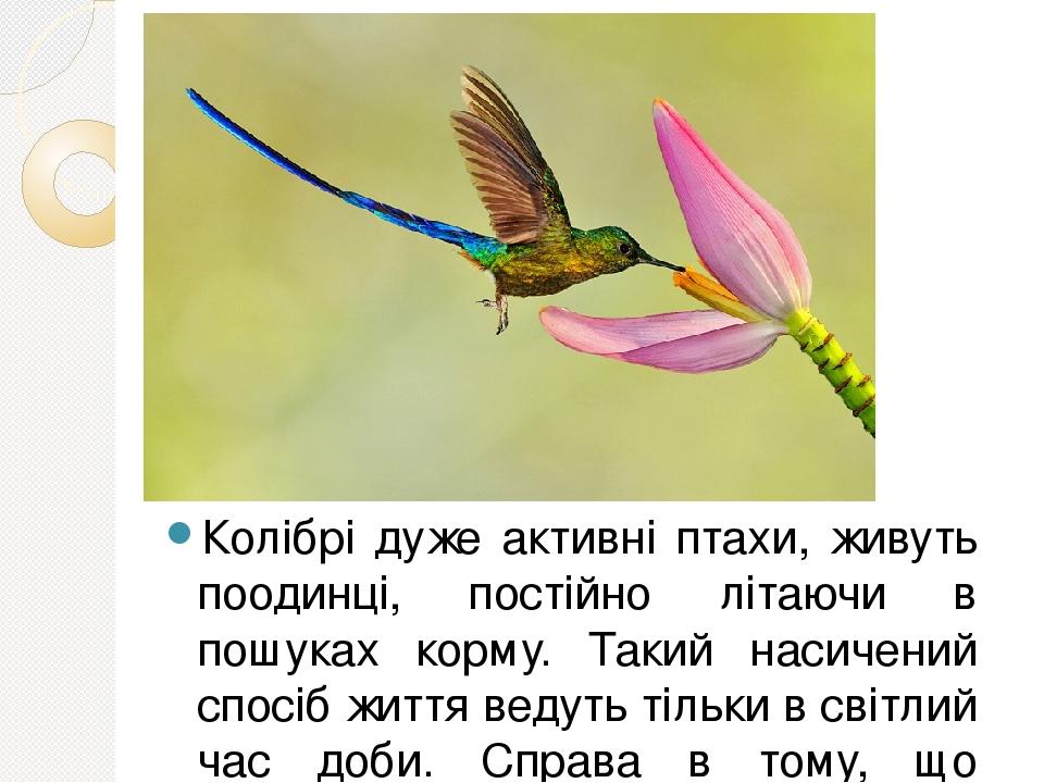 Колібрі дуже активні птахи, живуть поодинці, постійно літаючи в пошуках корму. Такий насичений спосіб життя ведуть тільки в світлий час доби. Справ...