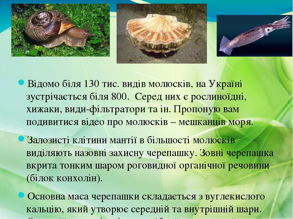 Відомо біля 130 тис. видів молюсків, на Україні зустрічається біля 800. Серед них є рослиноїдні, хижаки, види-фільтратори та ін. Пропоную вам подив...