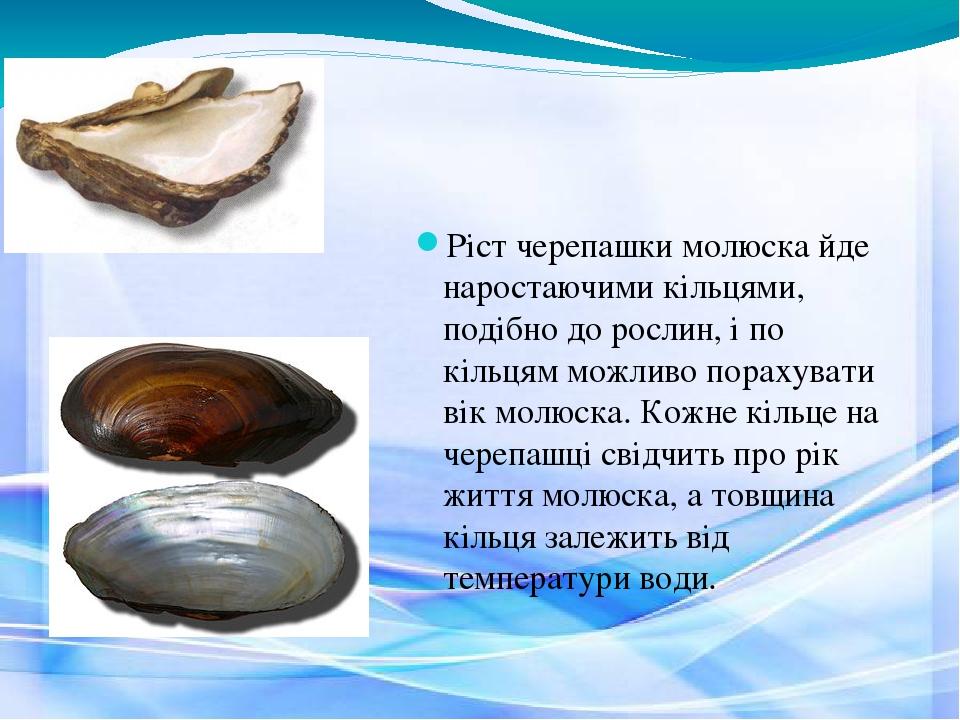 Ріст черепашки молюска йде наростаючими кільцями, подібно до рослин, і по кільцям можливо порахувати вік молюска. Кожне кільце на черепашці свідчит...
