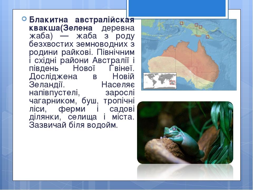 Блакитна австралійская квакша(Зелена деревна жаба) — жаба з роду безхвостих земноводних з родини райкові. Північним і східні райони Австралії і пів...