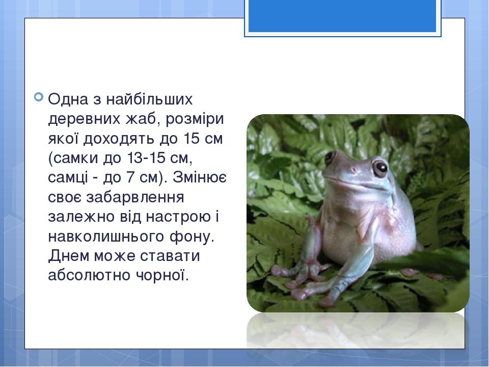 Одна з найбільших деревних жаб, розміри якої доходять до 15 см (самки до 13-15 см, самці - до 7 см). Змінює своє забарвлення залежно від настрою і ...