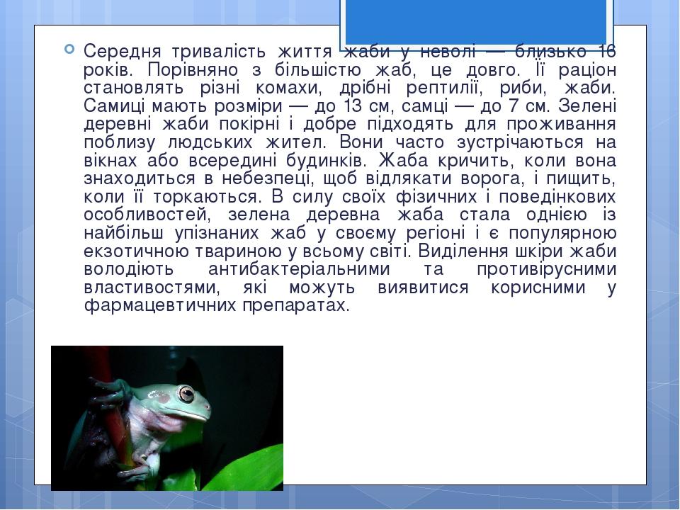 Середня тривалість життя жаби у неволі — близько 16 років. Порівняно з більшістю жаб, це довго. Її раціон становлять різні комахи, дрібні рептилії,...