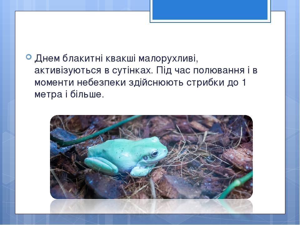 Днем блакитні квакші малорухливі, активізуються в сутінках. Під час полювання і в моменти небезпеки здійснюють стрибки до 1 метра і більше.