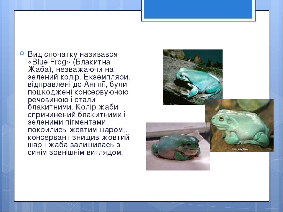 Вид спочатку називався «Blue Frog» (Блакитна Жаба), незважаючи на зелений колір. Екземпляри, відправлені до Англії, були пошкоджені консервуючою ре...