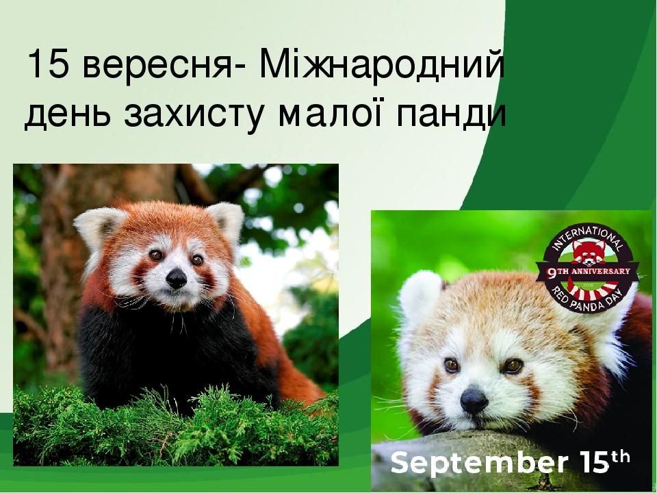 15 вересня- Міжнародний день захисту малої панди
