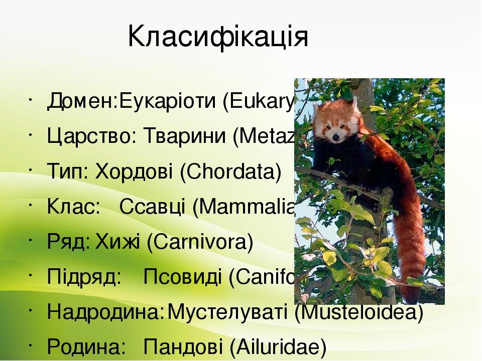 Класифікація Домен: Еукаріоти (Eukaryota) Царство: Тварини (Metazoa) Тип: Хордові (Chordata) Клас: Ссавці (Mammalia) Ряд: Хижі (Carnivora) Підряд: ...