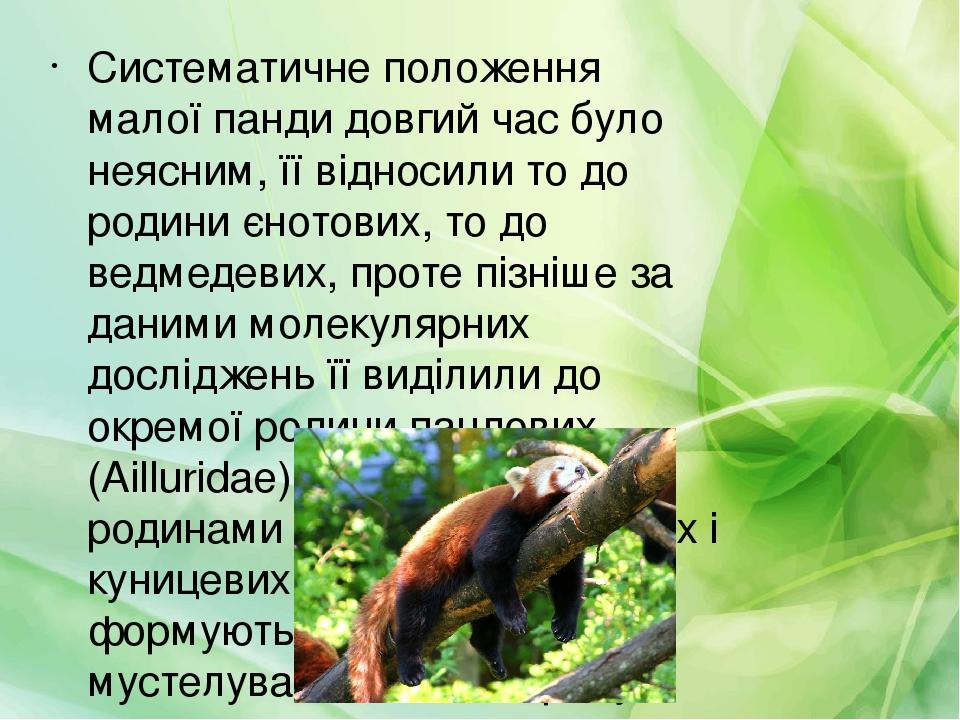 Систематичне положення малої панди довгий час було неясним, її відносили то до родини єнотових, то до ведмедевих, проте пізніше за даними молекуляр...