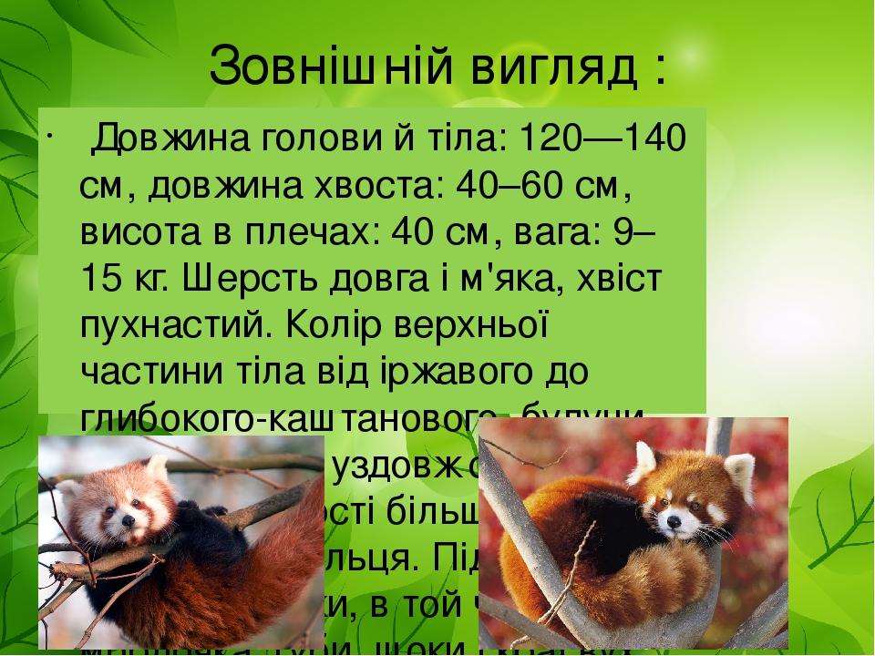 Зовнішній вигляд : Довжина голови й тіла: 120—140 см, довжина хвоста: 40–60 см, висота в плечах: 40 см, вага: 9–15 кг. Шерсть довга і м'яка, хвіст ...