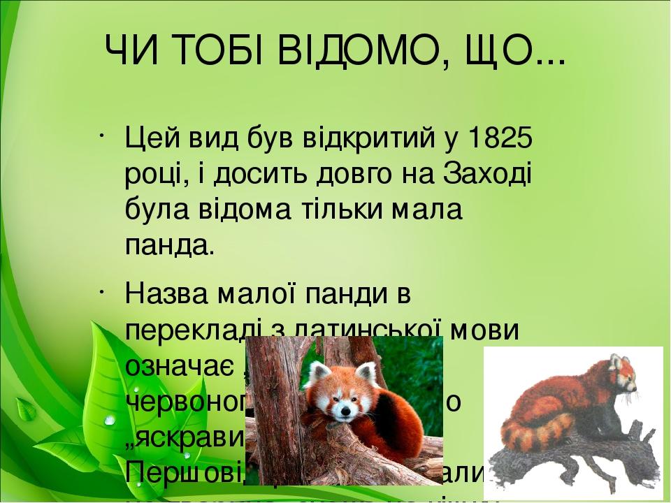 ЧИ ТОБІ ВІДОМО, ЩО... Цей вид був відкритий у 1825 році, і досить довго на Заході була відома тільки мала панда. Назва малої панди в перекладі з ла...