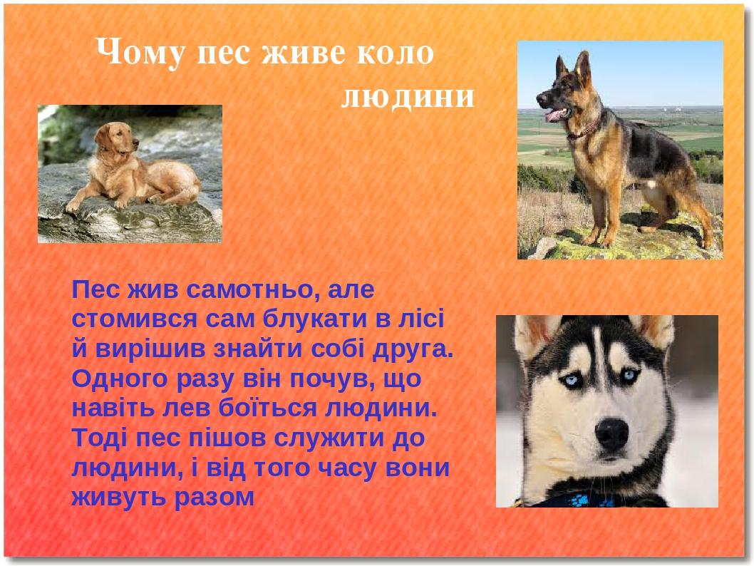 Чому пес живе коло людини Пес жив самотньо, але стомився сам блукати в лісі й вирішив знайти собі друга. Одного разу він почув, що навіть лев боїть...