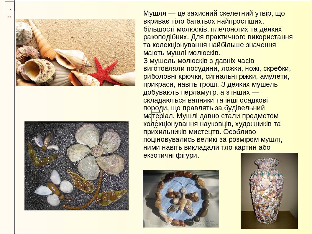 Мушля — це захисний скелетний утвір, що вкриває тіло багатьох найпростіших, більшості молюсків, плечоногих та деяких ракоподібних. Для практичного ...