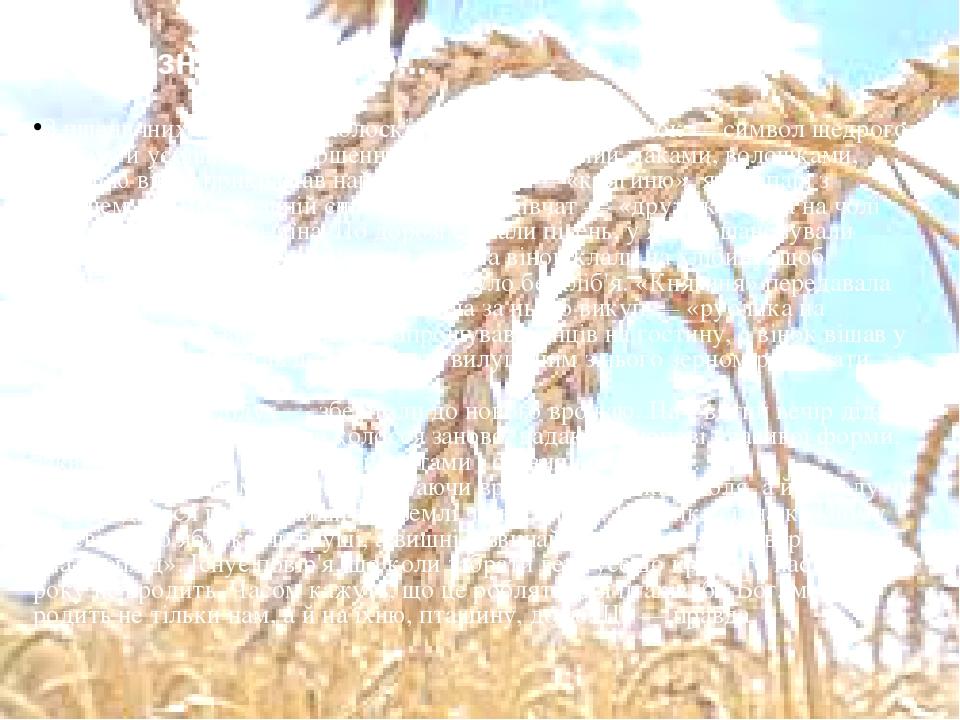 З пшеничних або житніх колосків дівчата сплітали вінок — символ щедрого врожаю й успішного завершення жнив. Закосичений маками, волошками, калиною ...